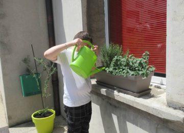E3D : des plantes et herbes aromatiques au collège