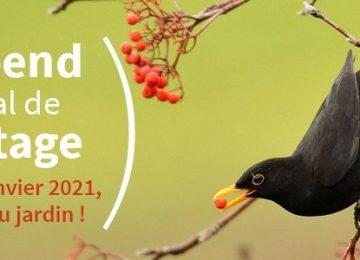 E3D : comptage des oiseaux avec la LPO et écriture de haïkus en 5D et 5E